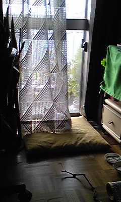 深窓の令猫