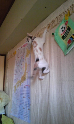 そして忍猫。