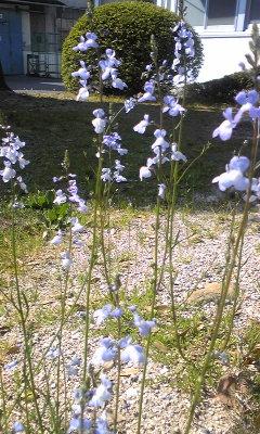 花〜調べます〜